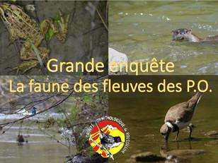 Grande enquête sur la faune des fleuves des Pyrénées-Orientales