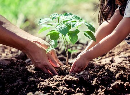 Tại sao các doanh nghiệp lại phải có trách nhiệm chăm sóc cho thiên nhiên và môi trường?