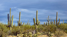 Exploring Saguaro National Park – Tucson, Arizona