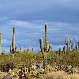 Exploring Saguaro National Park – Tucson, Arizona