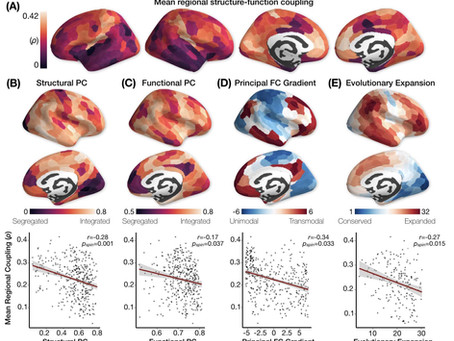 Development of Structure-Function Coupling in Youth