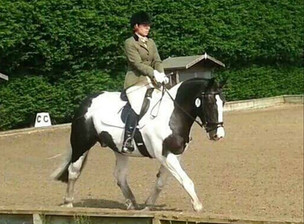 Coloured Horse/Pony - Online Showing Show