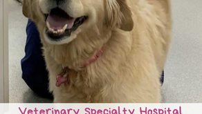 Veterinary Specialty Hospital makes exceptional pet care their specialty!