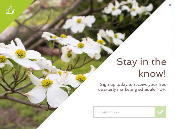 email signup, email marketing, website design