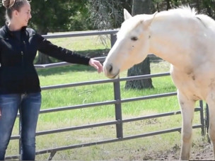 WATCH: Wild horses workshop teaches awareness to humans