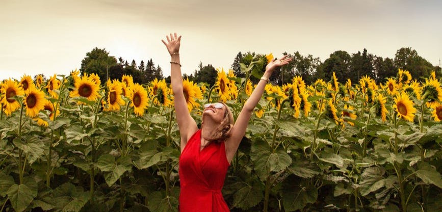 Happy woman in red dress with her hands up in a field of sunflowers