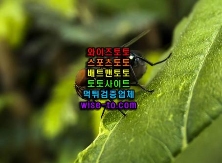 킹크로스 먹튀검증 [토토사이트]