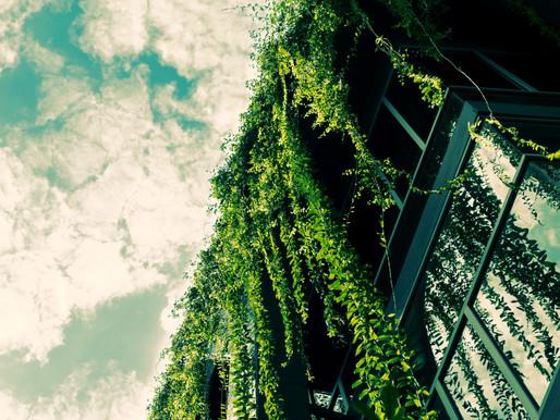 O papel do paisagismo na valorização de imóveis