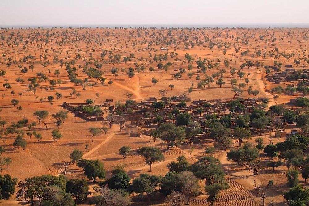 Árvores em terras africanas secas