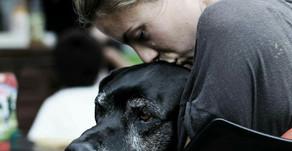 Wenn du einen jungen Hund bei dir aufnimmst, ...