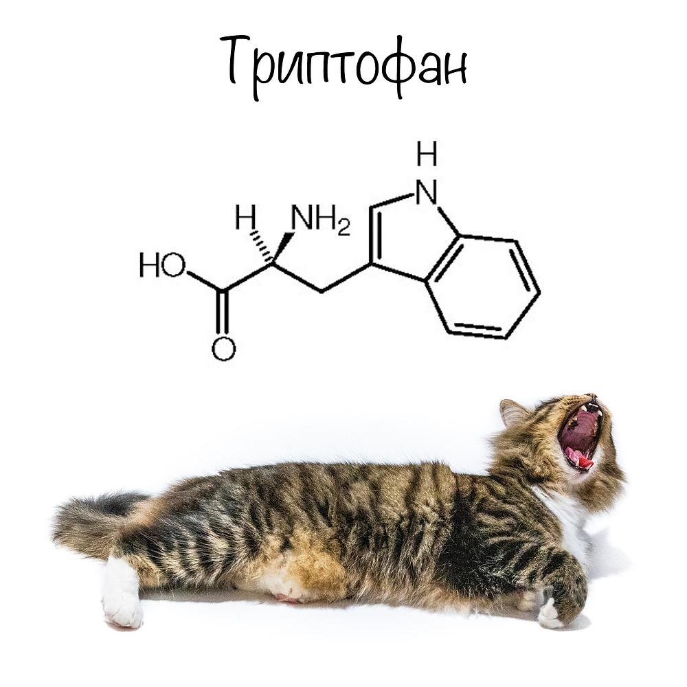 Триптофан в рационе кошек