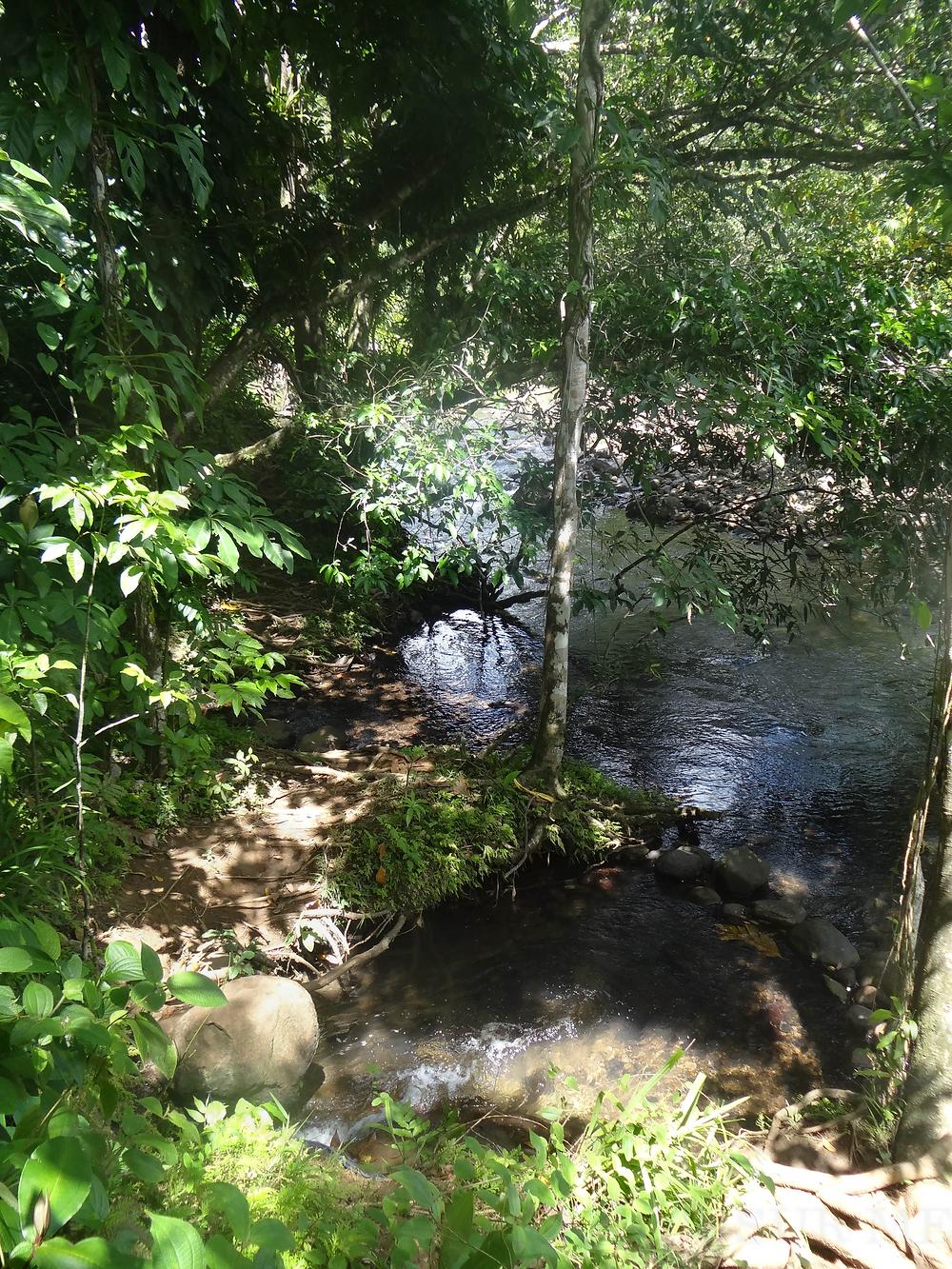 ruisseau sentier randonnée de la cascade tambour