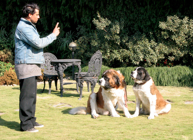 Impulse Control Training and Games for Dogs