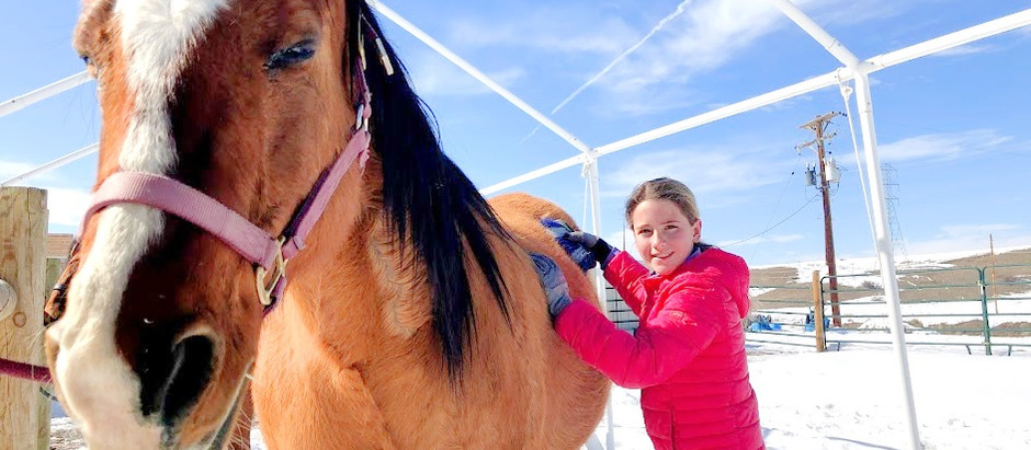 How Well Do You Know a Horse?