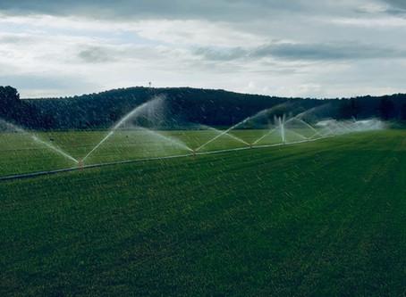 Hazır çimde sulama ne zaman, ne kadar ve nasıl yapılmalı?