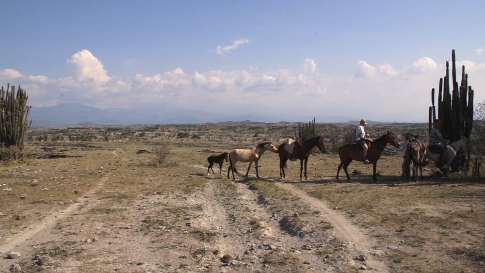 Des chevaux libres intrigués par nos montures