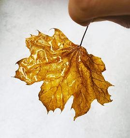 Valgomi medžių lapai