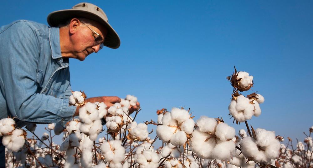tissu en coton biologique