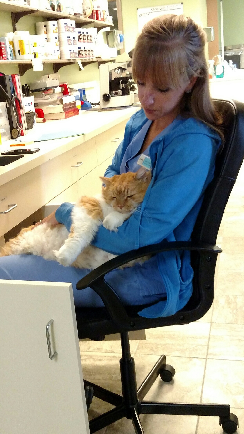 Veterinary Assistant holding orange/white cat in chair