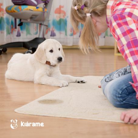 """""""Potty Training"""": Consigue que tu cachorro vaya al baño en el lugar que quieres"""