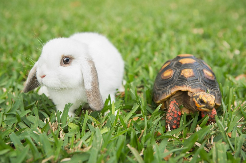 {F. IMAGE OF TORTOISE AND HARE) Daniel James Media