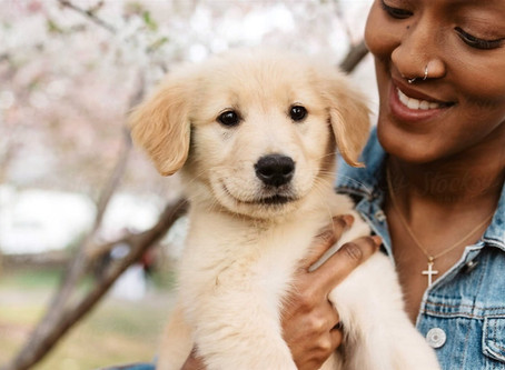 6 Tips for Adopting a Dog During a Pandemic