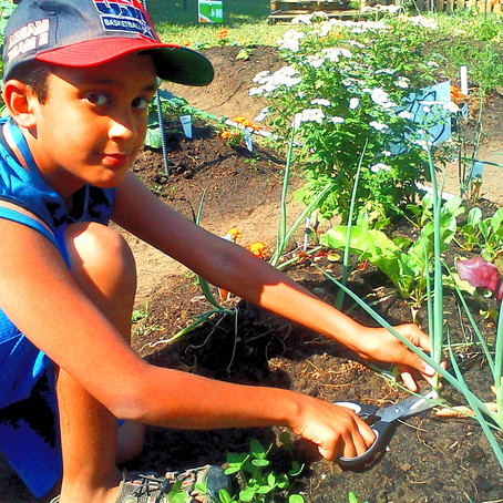 Intégrez l'agriculture urbaine à votre classe!