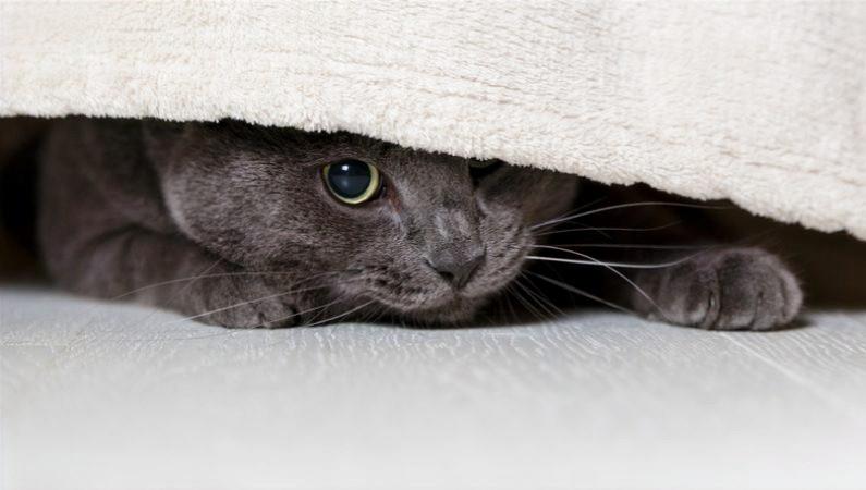 o que causa stress e ansiedade no gato - CATNIP CatUp