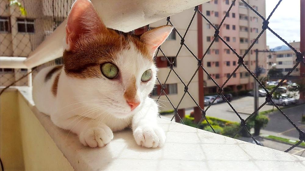 gato na varanda com rede de proteção