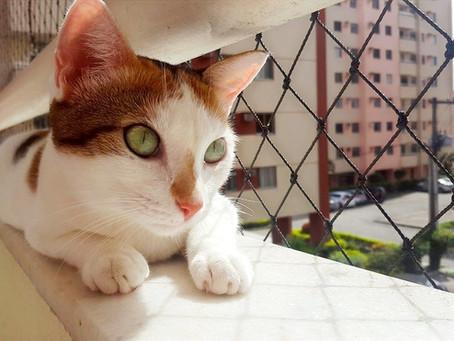 Como Adaptar um Gato Recém Adotado ao Novo Lar - Passo a Passo
