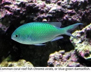 Marine Science in the News: Changing water temperatures causing animals to relocate