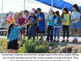 Marine Science Camp 2017: What have we been up to?