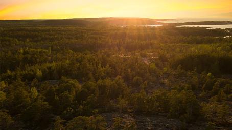 Klimatet behöver skogen