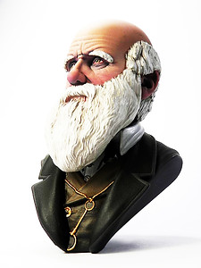 Busto di Charles darwin scale 1/10 lateral view