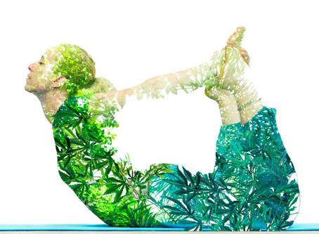 Biological harmony: Endocannabinoid system.
