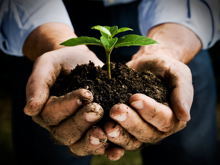 Planting a Seed for Growth
