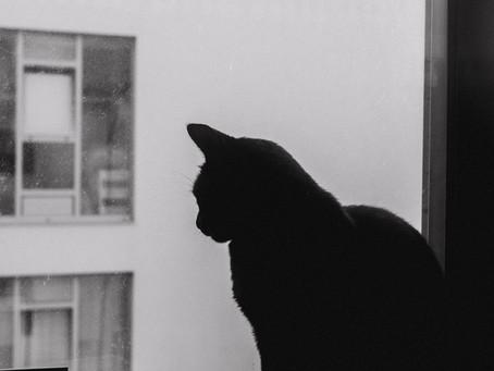 A Casa, a Família e o Gato (Episódio 5)