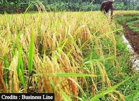 Pakistan to Oppose India's GI Tag for Basmati Rice in the European Union