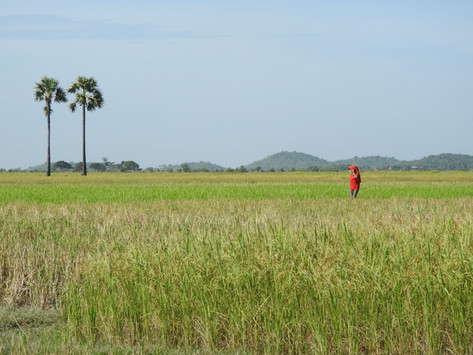 Where does rice come from?