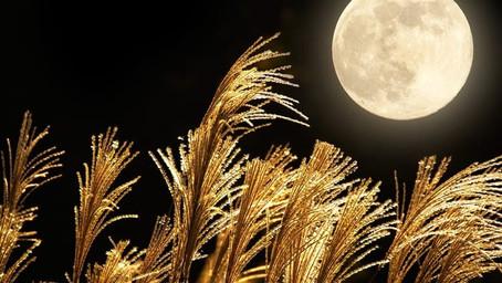 十六夜の満月 まことの道ぞしきしまの道