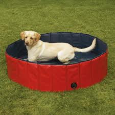 Yellow lab pup in inflatable pool in the yard