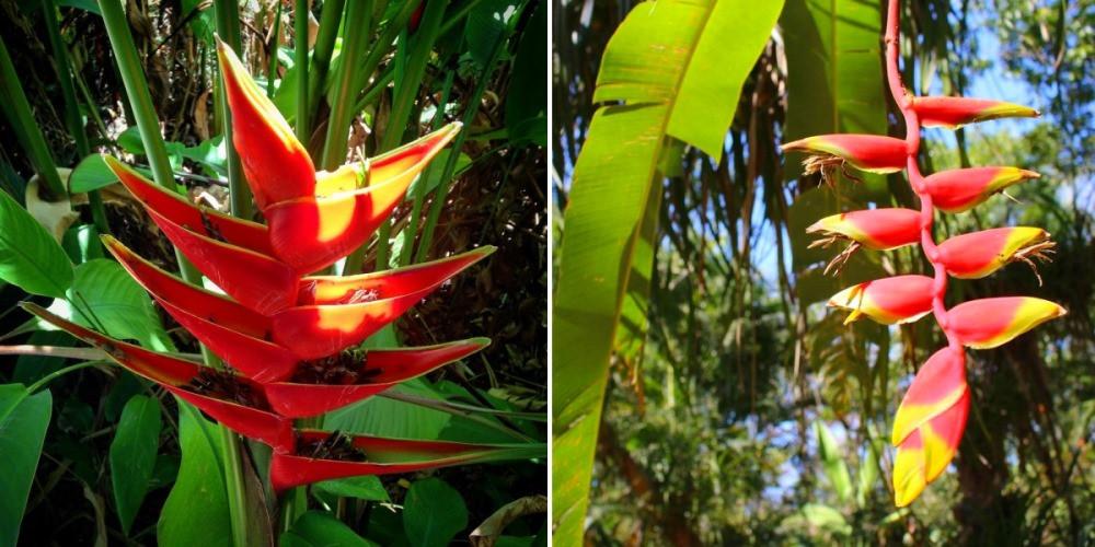 Fleurs santa teresa costa rica