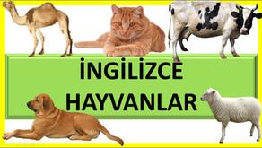 İngilizce Hayvanlar