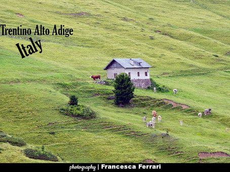 PQs Landscape Pasture & Dolomite in the Fiemme Valley - Trentino Alto Adige... Italy