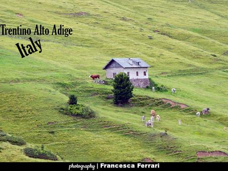 PQs Landscape Pasture & Dolomite in the Fiemme Valley - Trentino Alto Adige... Italy
