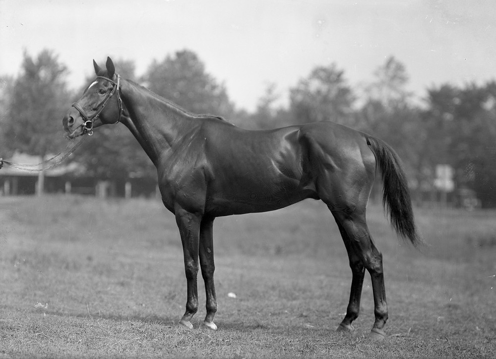 "Thoroughbred racehorse Exterminator, nicknamed ""Old Bones"""