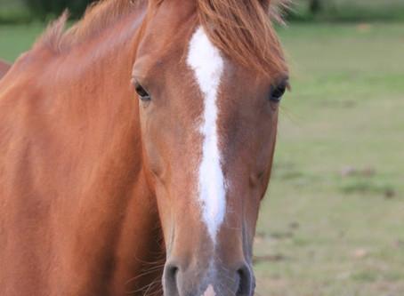 Un jour, un poney : Cocoon de la forge