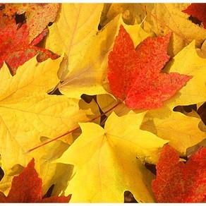 Fall Break is Coming!