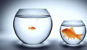 Being A Little Fish in a Big Pond
