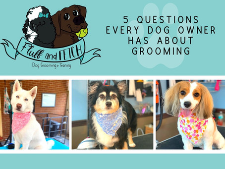 5 Questions Every Dog Owner Has About Grooming